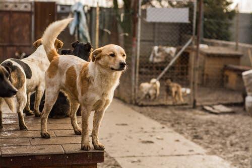 Perros en refugios